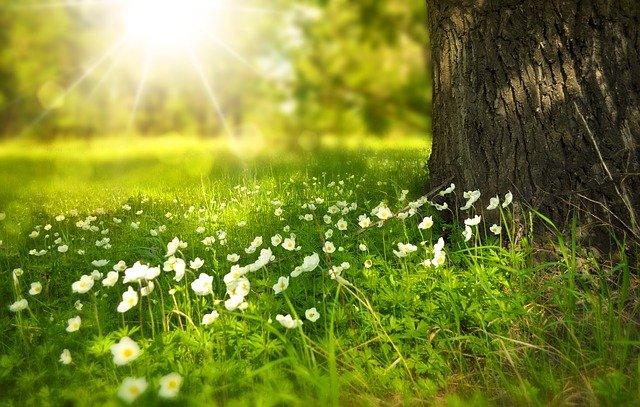 wywabianie plam z trawy